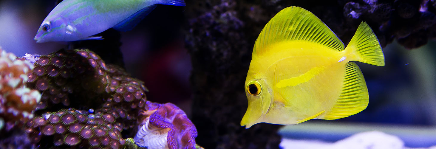 Seatech Phoenix Saltwater Aquarium:  Planning the Basics Will Give You a Great Start!