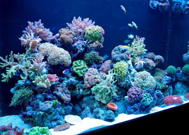 "Seatech – A ""Budding"" Relationship For Coral Beauty"