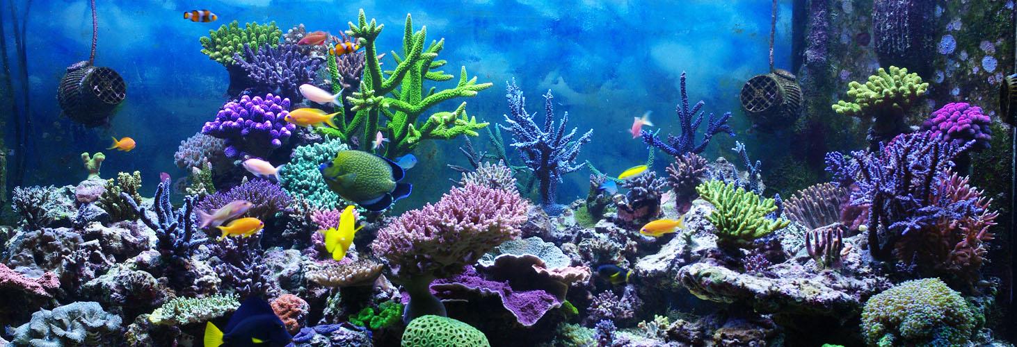 phoenix-aquarium-design