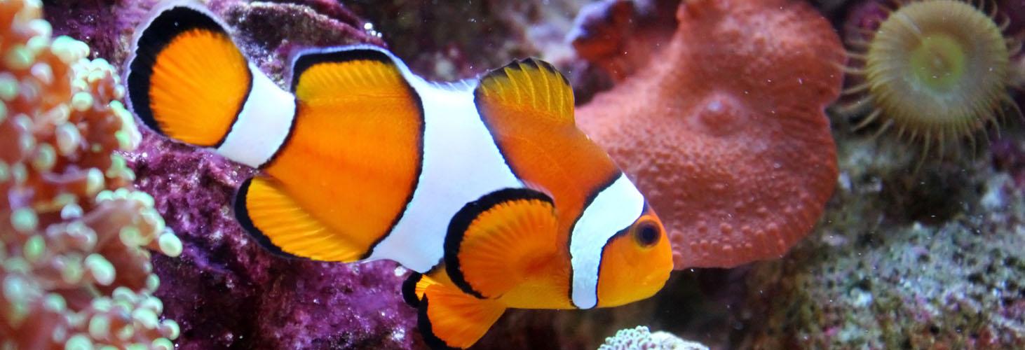 phoenix-saltwater-aquarium