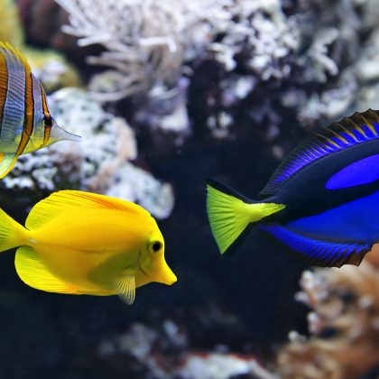 The Secret to a Thriving Aquarium: Four Tips you Should Know