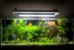 Secret to a Thriving Aquarium