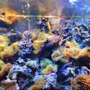 What Lighting Should you Buy for a Saltwater Aquarium vs Reef Aquarium