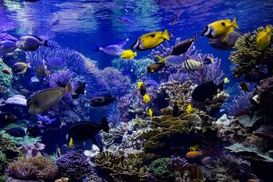 Basic Types of Aquarium Filtration for a Healthy Tank