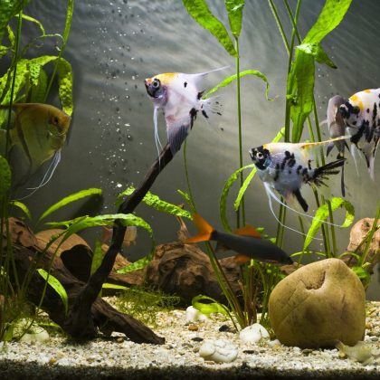 Aquarium Filtration 101: Let's Explore the Basic Types of Aquarium Filtration for a Healthy Tank