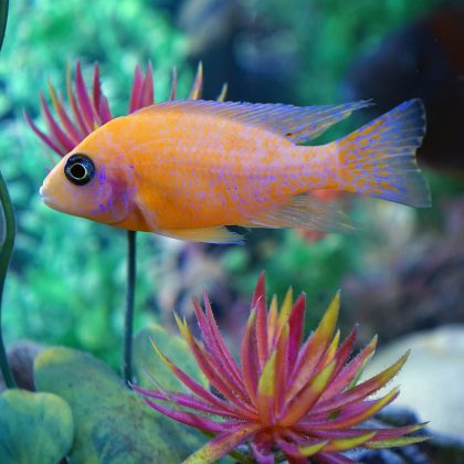 5 Benefits of Starting a Nano Aquarium in 2017