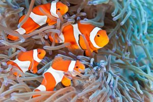 Here are some fun facts about fish, such as that the average clownfish weighs 9 ounces.
