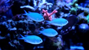 Best Nano Saltwater Fish for your Nano Tank