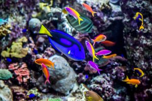 Fun Facts about Fish and Aquarium Living: There are about 30,000 species of fish.