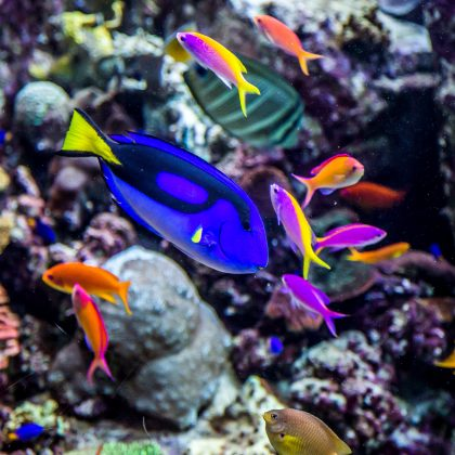 How to Add Good Water Movement into Your Reef Aquarium