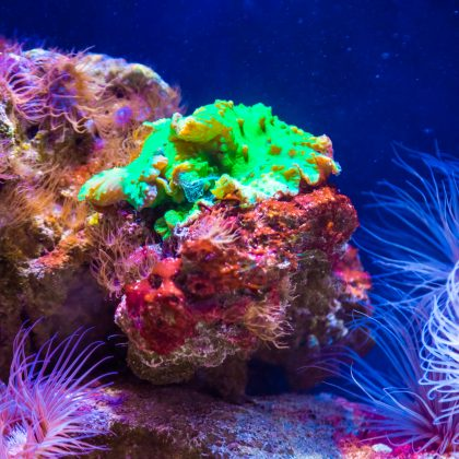 Aquarium Basics 101: What you Need to Know about Live Rock for Fish Tanks
