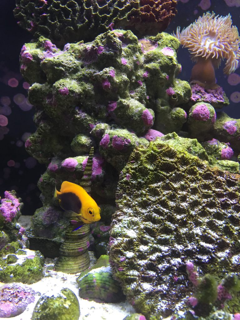 What you Need to Know about Live Rock for Fish Tanks