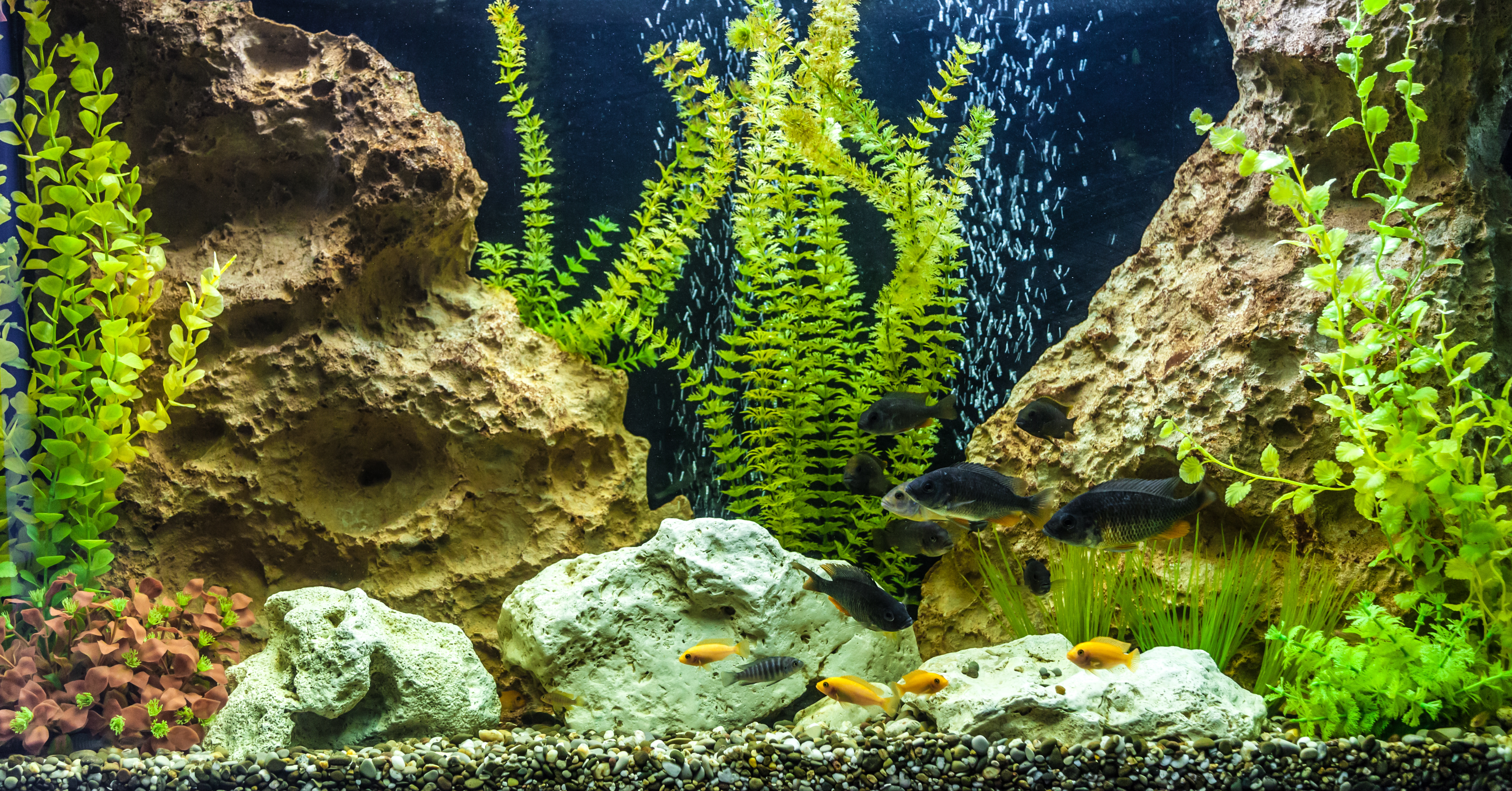 Aquarium Basics 101: What you Need to Know about Dry Rock for Fish Tanks