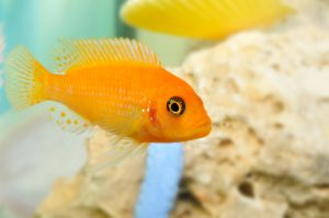 You Need to Know about Dry Rock for Fish Tanks