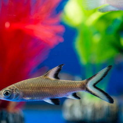 Ever Want to Own a Shark? Here are the Best Sharks for a Home Aquarium