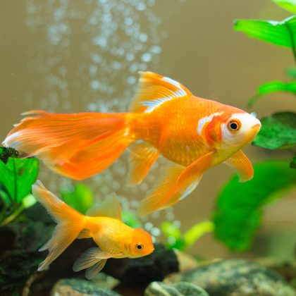How to Clean an Aquarium Tank: What to Do and What Not to Do