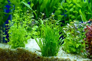 How to Clean an Aquarium Tank