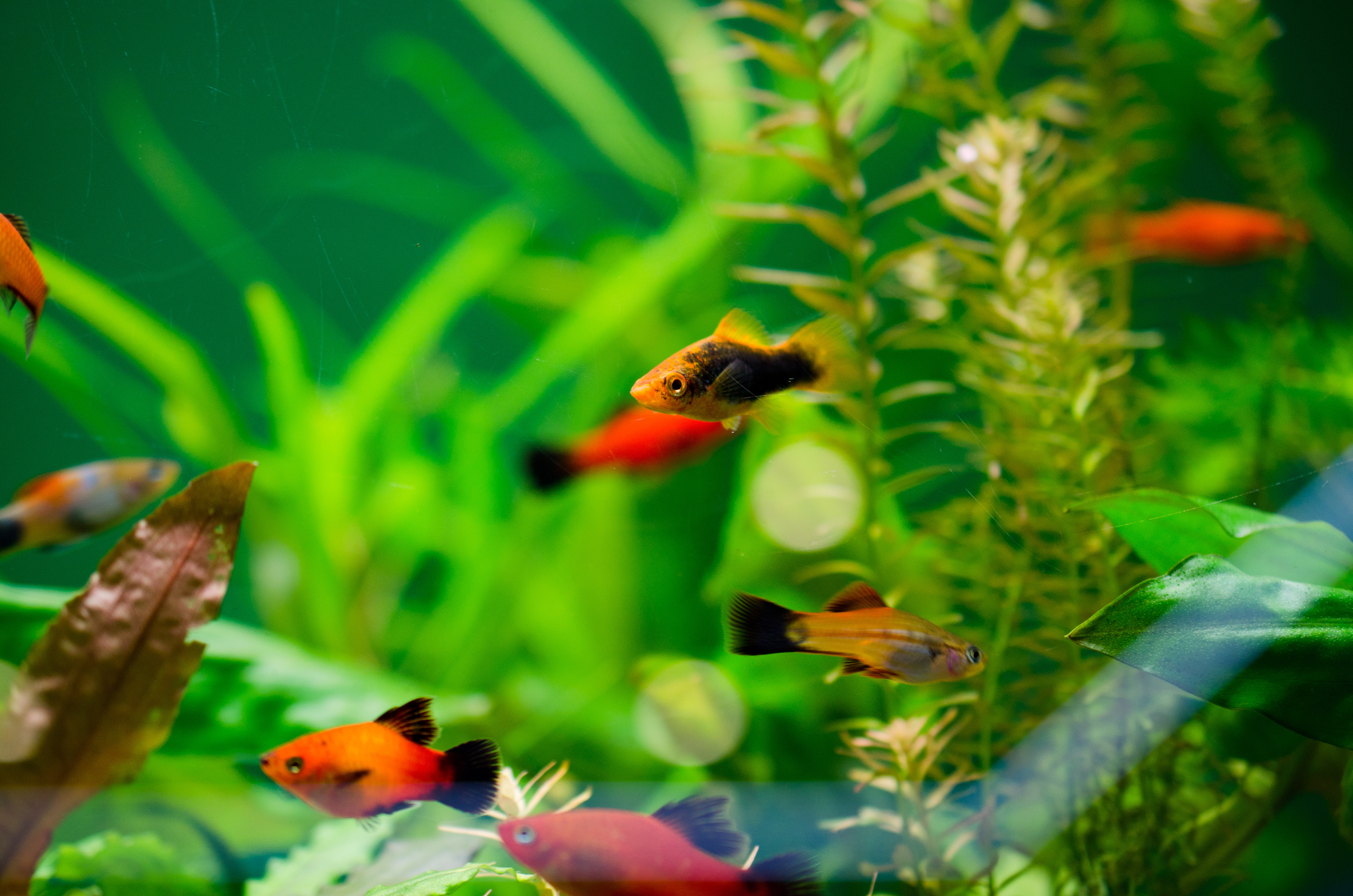 Artificial Plants or Real Plants for an Aquarium:  The Pros and the Cons of Each
