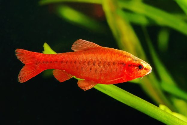 The Average Lifespan Of Common Aquarium Fish How Long You Can