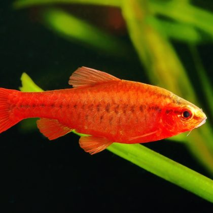The Average Lifespan of Common Aquarium Fish: How Long You Can Expect to Keep 'Em