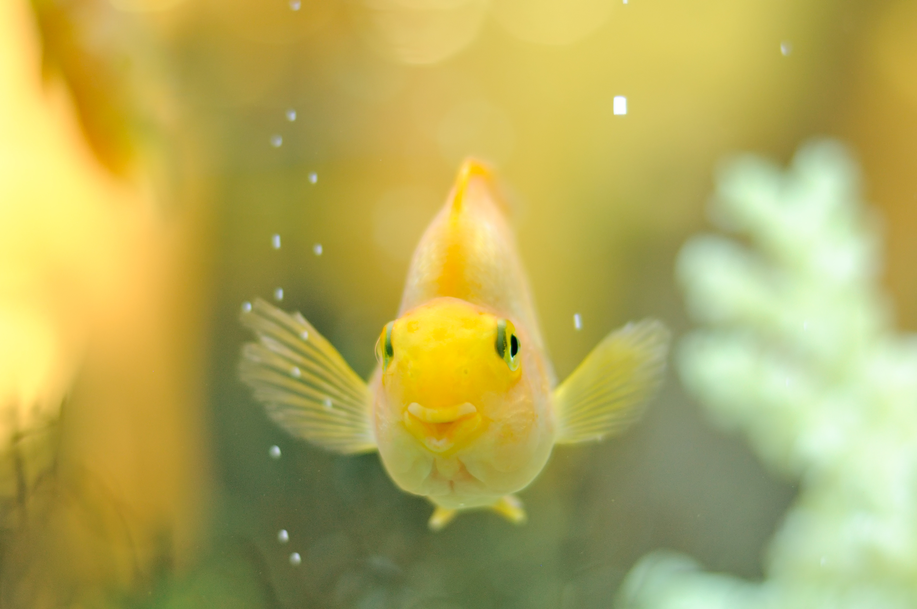 Loving the Life: How to Tell if Your Fish are Happy