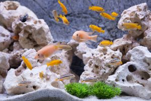 One way to ensure that your fish are happy is to provide them with a proper playground with rock, gravel, and plants.