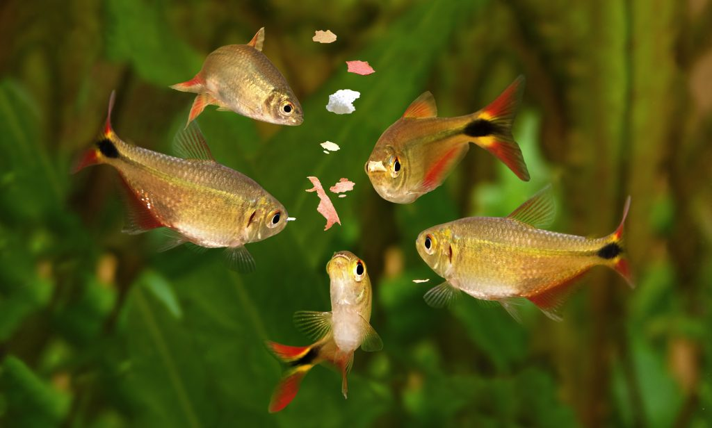 Flake foods are easy options for aquarium owners.