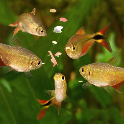 19 Simple Fun Facts about Fish and Aquarium Living
