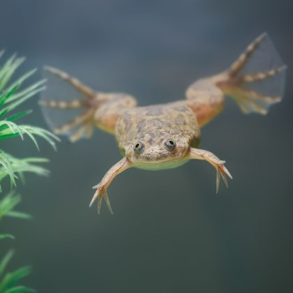 Can You Add a Frog to a Freshwater Fish Tank?