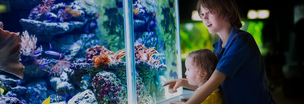 Ask our aquarium maintenance technician about the differences between glass and acrylic fish tanks.
