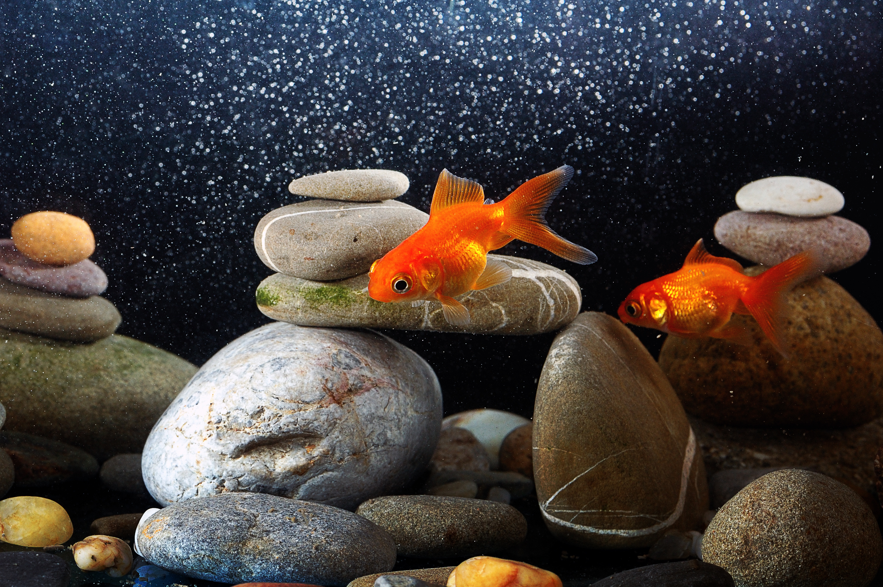 Aquarium Living: How Fish Sleep