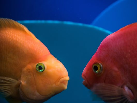 If your fish are butting heads, literally and metaphorically, it's a sign that your aquarium needs a redesign. For aquarium maintenance services in Phoenix, contact Seatech Aquariums today.
