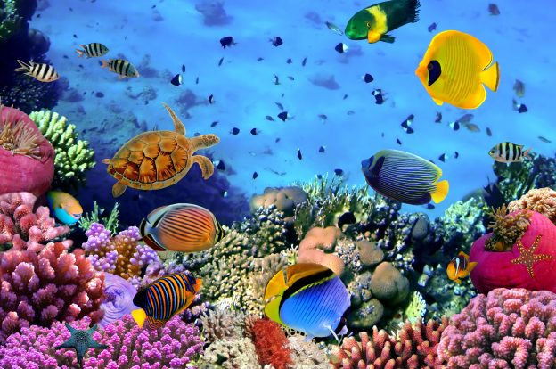 Have you ever wondered why fish are so colorful, especially reef fish?