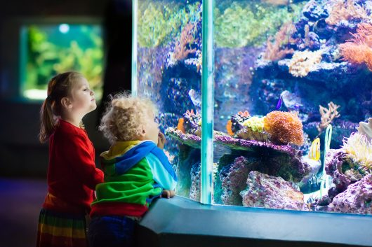 When it comes to fish tank sizes, there's really no harm in going big and bold if you have the space and an excellent aquarium technician to help you maintain your aquarium. Imagine one of these zoo aquariums in the lobby of your office building!