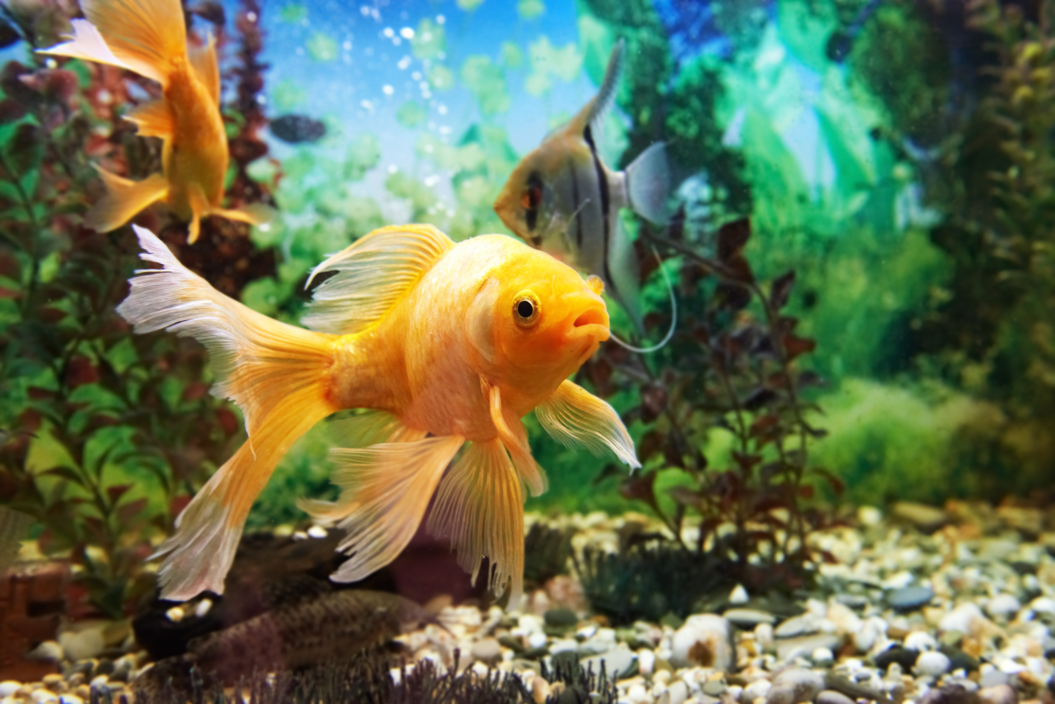 How do fish drink water? Or do fish drink water at all? It's a question many people ask. The answer is different depending on if it is a freshwater fish or saltwater fish.