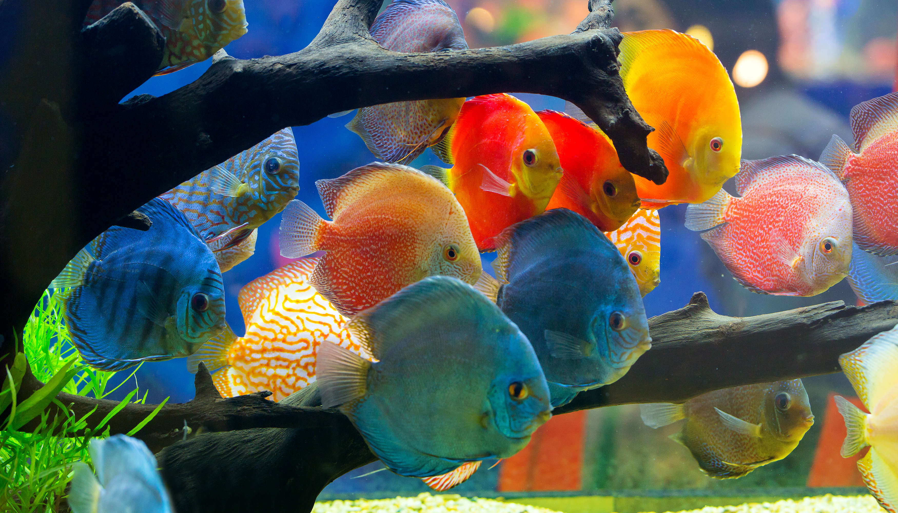 Vitamins for freshwater and saltwater fish can accomplish everything from making the color of fish more vibrant to helping the fish recover from an illness.