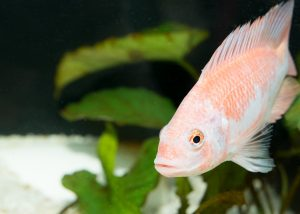 Vitamins for freshwater and saltwater fish can aid in regenerating fins and combating disease.