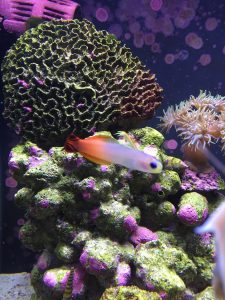 Ways to control algae growth in a fish tank include not overfeeding fish, as well as using proper aquarium filtration systems.