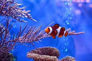 It's important to protect livestock during a power outage. You can do so by having a battery-operated air pump and generator available to use for your aquarium.