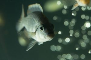 Knowing what fish tank owners should do during a power outage can help protect your livestock from uncomfortable or even dangerous conditions.