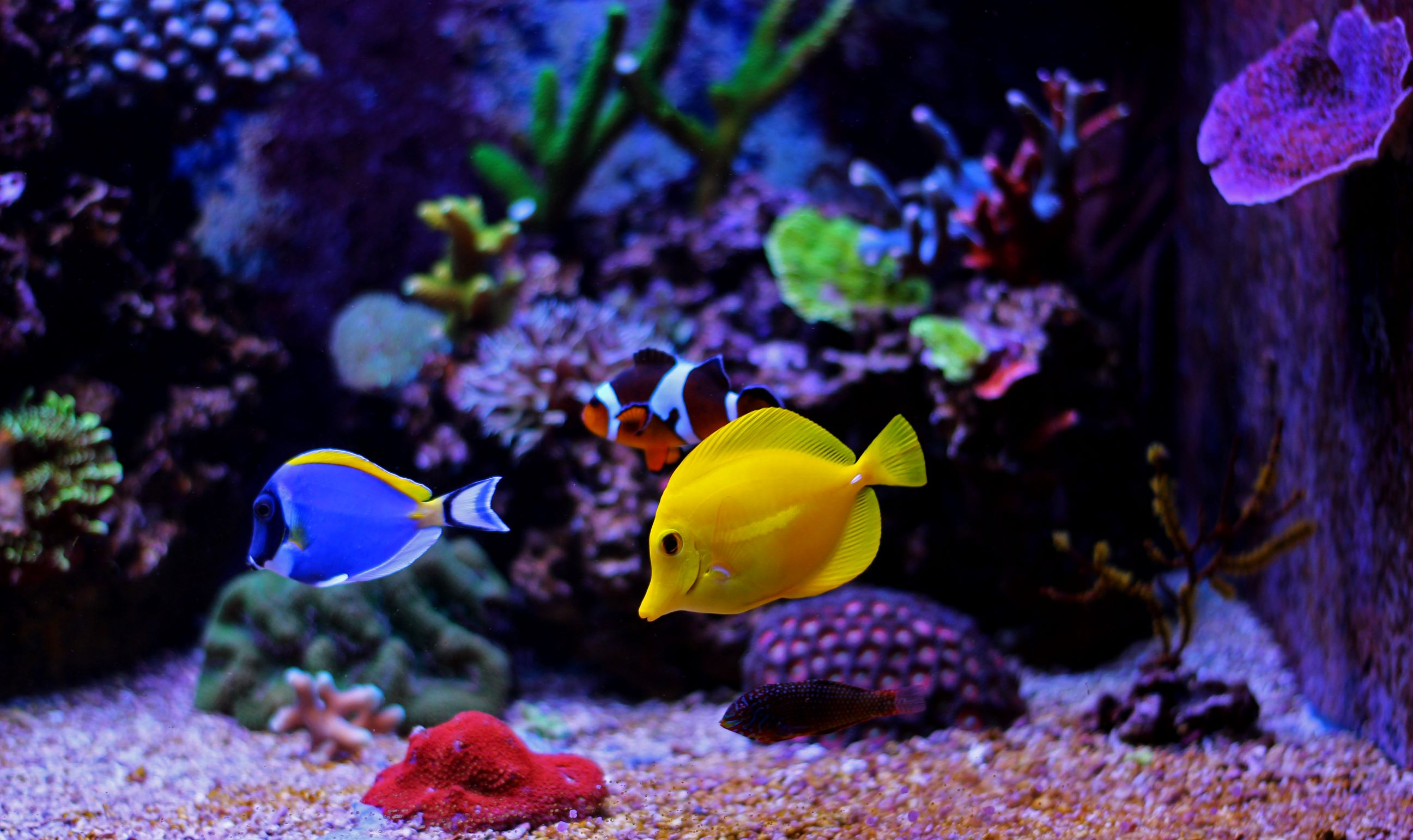 Tropical fish can be either saltwater fish or freshwater fish. They are often vibrantly colored and tend to prefer slightly warmer water in the fish tank.