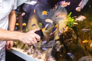Can't decide between an acrylic fish tank or a glass fish tank? Here are the pros and cons of each.
