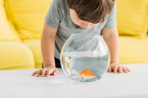 Goldfish might not be the best choice for a child's first fish, but with some education and aquarium maintenance tips, the pet could possibly live up to 20 years.