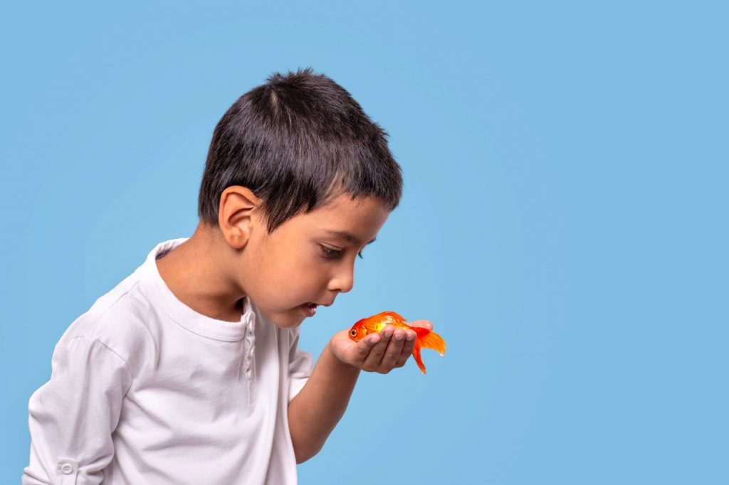A goldfish may be challenging to maintain for beginning hobbyists, but if your child's wish is to have a goldfish, the pet can live a long and happy life if the child learns proper fish tank maintenance skills.