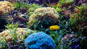 Components of a reef tank should include plants and coral.