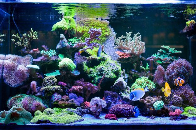 Basic components of a reef tank include saltwater fish, coral, filters, gravel, rock, and a lighting source.