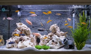 Components of a reef tank include rock and other decor.