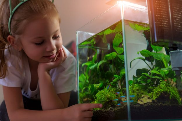 A girl admires fish in a nano tank. There are many species of freshwater fish and saltwater fish ideal for nano aquariums.