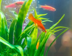 Adding aerators, powerheads, and air stones can improve circulation in order to control the temperature of a fish tank.