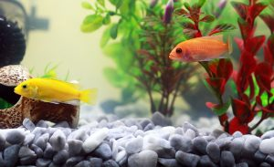 Options for lighting for planted aquariums include LED lights.